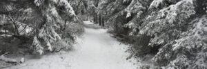 Czerwony szlak przed Lubomirem