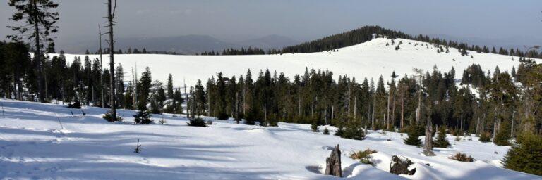[2021-02-26] Turbacz z doliny Kamienicy